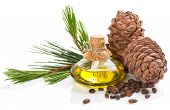 stock photo of pine nut  - Cedar pine nuts cones and oil isolated on white background - JPG