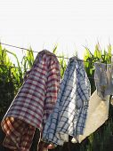 picture of clotheslines  - Men - JPG
