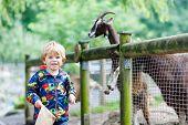 stock photo of baby goat  - Happy little blond kid boy feeding goats on an animal farm - JPG
