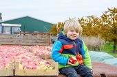 stock photo of apple orchard  - Adorable funny toddler boy sitting on tractor with red apples and eating fruits - JPG