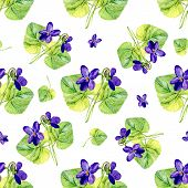 image of violet  - Vector seamless background with watercolors violets on white background - JPG