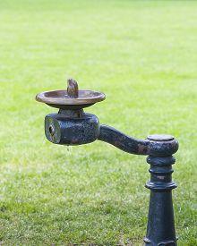 pic of fountain grass  - Close - JPG