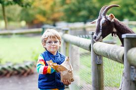 foto of baby goat  - Cute blond kid boy with glasses feeding goats on an animal farm - JPG