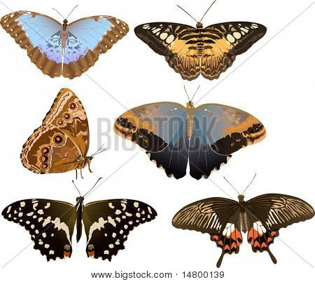 illustration with six tropical butterflies isolated on white background