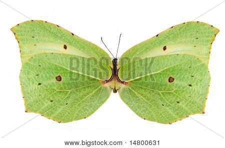 light green butterfly isolated on white background