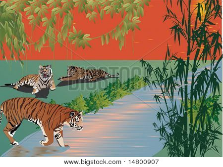 illustration with three tigers near river in forest