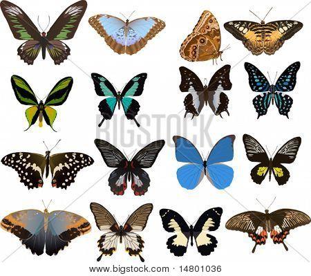 Abbildung mit sechzehn Farbe Schmetterlinge isoliert auf weißem Hintergrund