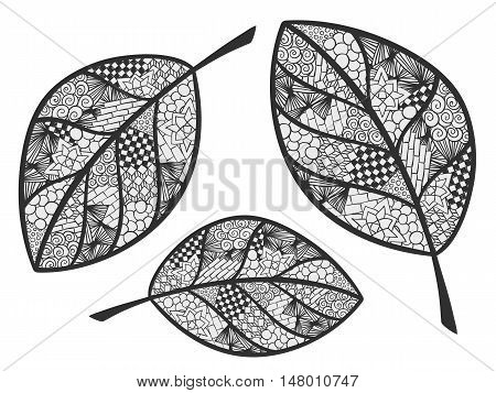 Leaf doodle illustration. Autumn theme ornament. Zentangle coloring page. Vector image