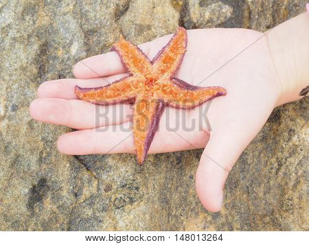 Purple Starfish Lying On Its Back, Showing Orange Color Tentacles Inside A Child's Hand