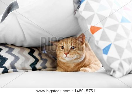 Funny cat under pillows