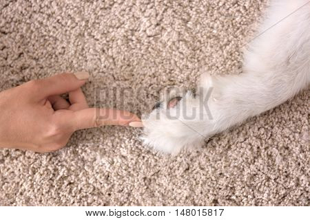 Female hand and dog paw on carpet
