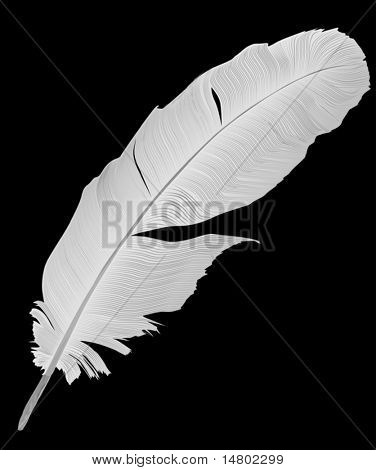 illustration with gray feather on white background