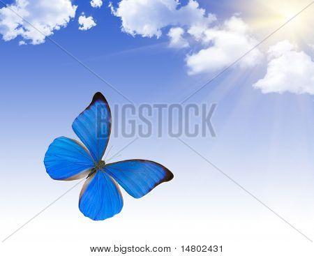 tropical blue butterfly under bright sun