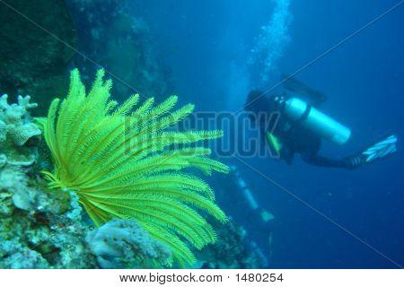 Scuba Diving 5