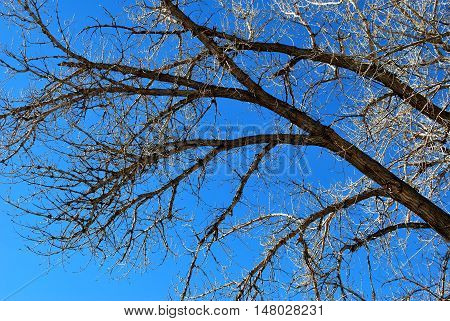 Tree branches standing tall high in the sky.