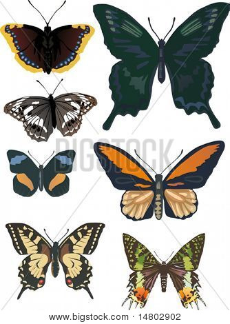 illustration with seven different butterflies isolated on white background