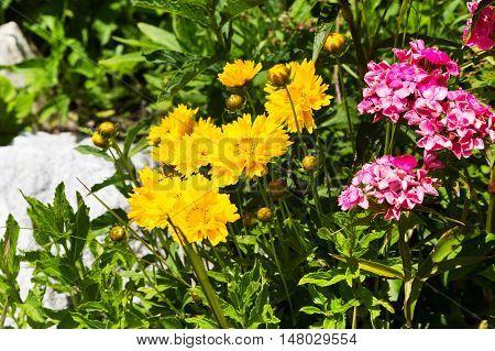 marigold, Marigolds, Tagetes erecta flowers summers nature background