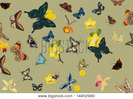 illustration with tropical butterfly and flower background