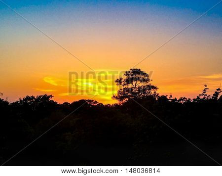 amazing orange sunset over the trees in Hilton Head