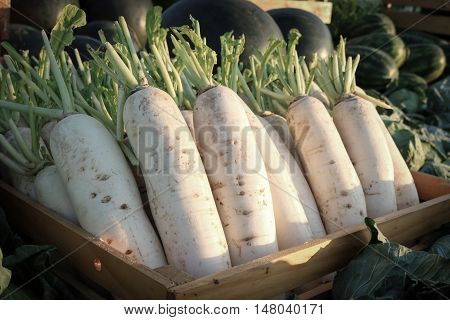 White radish in wooden crate with watermelon and cabbage