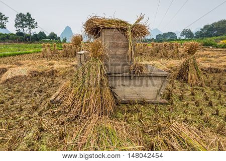 Wooden equipment for processing the rice crop in a rice field in rainy overcast weather. Hand-threshing is still practised in many parts of China.