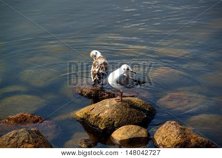 beach sea life bird life amazing air gray wing holiday beach white relax travel sun bright