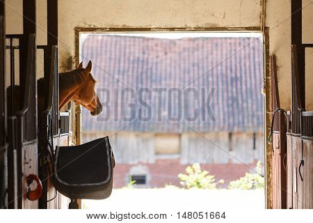 The horse looking over the stable doors
