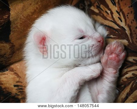 White adorable newborn kitten sleeping on the bed