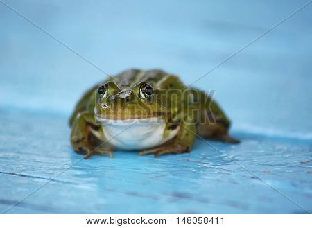 Green frog sitting on a wooden boards outdoors