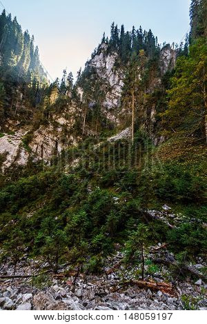 Canyon In Romanian Mountains