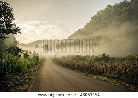 Road in the Fog forest vintage style