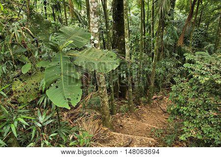 Jungle Trail, Brazil
