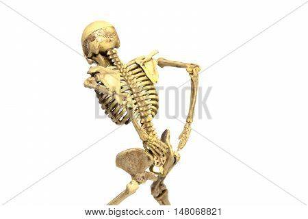 human skeleton low back pain isolated add clipping path