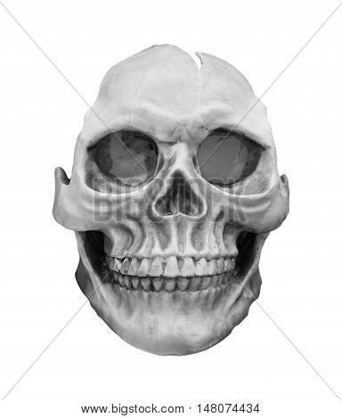 human skull model isolated on white background.
