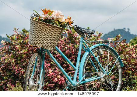 Basket with flowers on bicycle retro old