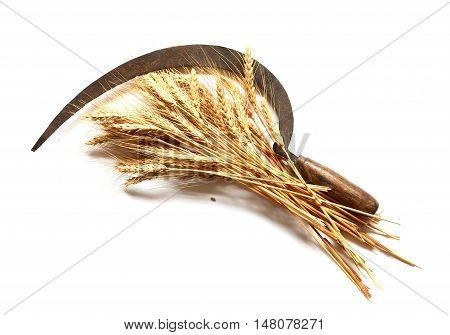 Bunch of wheat and old sickle on white background