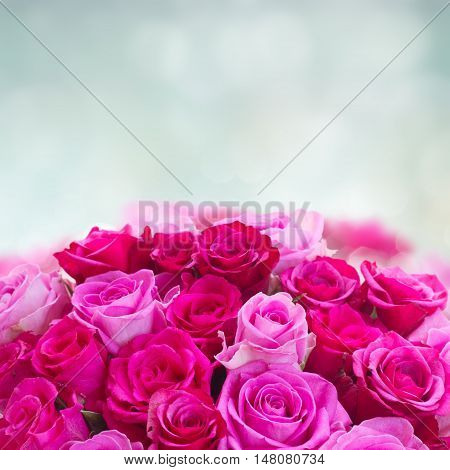 bouquet of pink and magenta fresh roses border on blue bokeh background with copy space