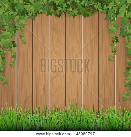 Grass and hanging ivy on old wooden planks background.