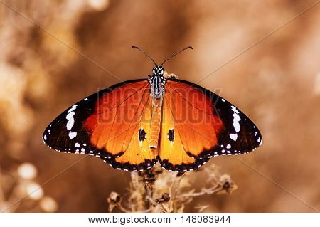 a beautiful butterfly open is wings with a great background