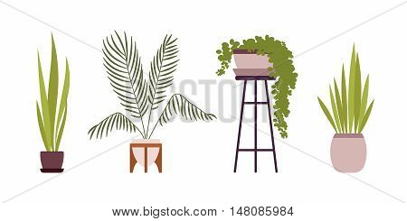 Set of four green floor plants in retro pots isolated against white background. Cartoon vector flat-style illustration