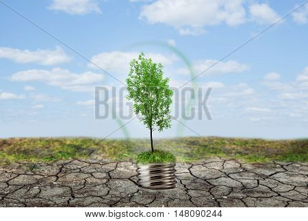 Green Tree In Lamp On Dry Soil