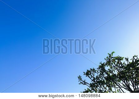 Clear Blue Sky As A Background Wallpaper, Pastel Sky Wallpaper, With Some Part Of The Tree