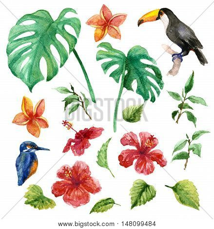 Raster colorful set of most recognizable elements of a wild tropical nature with some fauna endemics. Elements for decorating and design, illustration for special books, atlases, maps, children goods and printed production.