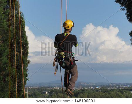 Tree surgeon lumberjack hanging from a big tree