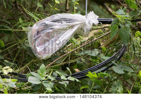 Temporary repair of telephone cable protected by plastic bag. Spliced wires amongst vegetation within telecommunication cable after hasty repair protected from elements by zip-tied bag