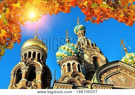 Closeup view of Our Saviour on Spilled Blood cathedral in St Petersburg, Russia framed by yellowed maple leaves. Autumn architectural landscape of St Petersburg landmark. View of St Petersburg, Russia in autumn