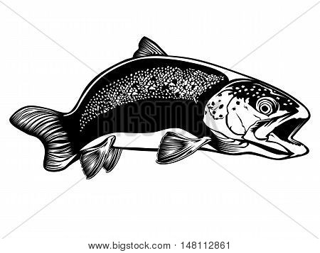 Trout Detailed Isolated On White 2