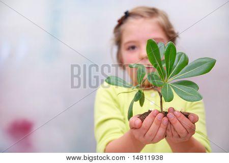 concepto de crecimiento con la pequeña planta en mano