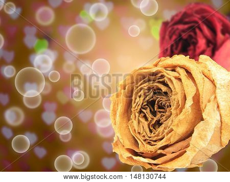beautiful dry white and red rose on bubble with blur heart bokeh gold background