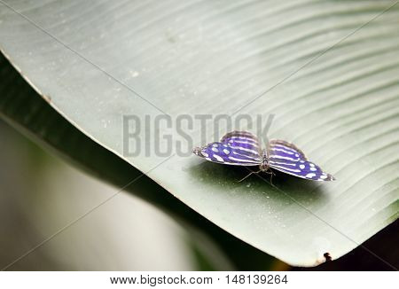 Colorful exotic Butterfly sitting on a Leaf Close up 3